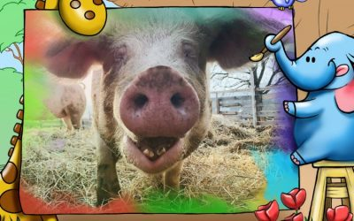Introductory Words-Pepa´s horoscope (The year of a pig 2019)